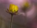 I ett rosa skimmer