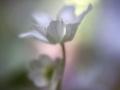 Vårkänslor