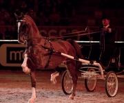 Horse show Globen
