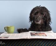 Jag läser bara Svenska Dogbladet