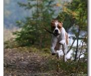 Med spring i benen