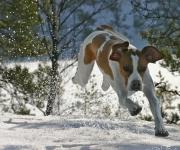 Tippa springer i snön