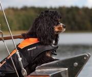 Hund på sjön 1