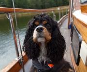 Hund på sjön 4