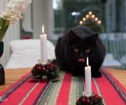Katt vid juleljus