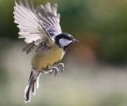 Stilla flygtur