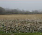 Gotländskt staket