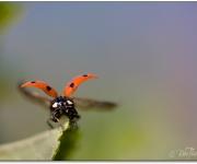 Far och flyg