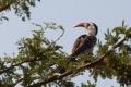 fågel i tanzania