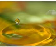 En droppe i gula havet