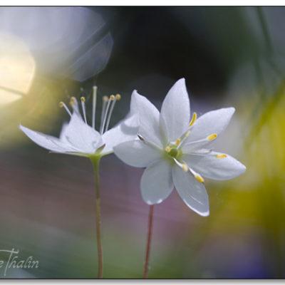Tavla blommor Vackra tavlor med mycket känslor. Här hittar du massor av konstfoto med inspiration från djuren och naturen