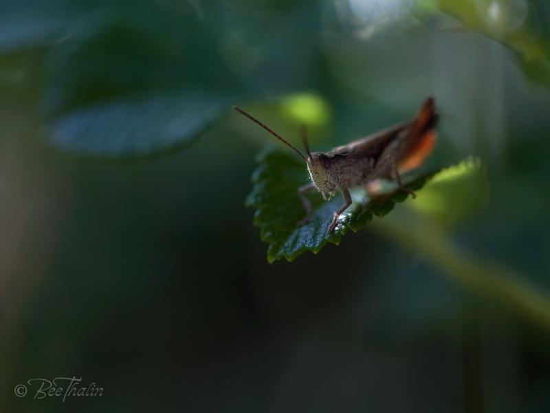 Fluga hoppar från blad i en lummig miljö