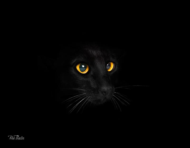 svart katt kattögon