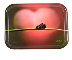 Bee Thalin Layout & foto - brickor