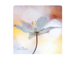 Bee Thalin Layout & foto - glasunderlägg