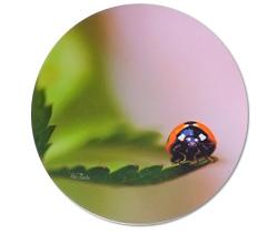 Bee Thalin Layout & foto -grytunderlägg