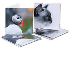 Bee Thalin Layout & foto - konstkort