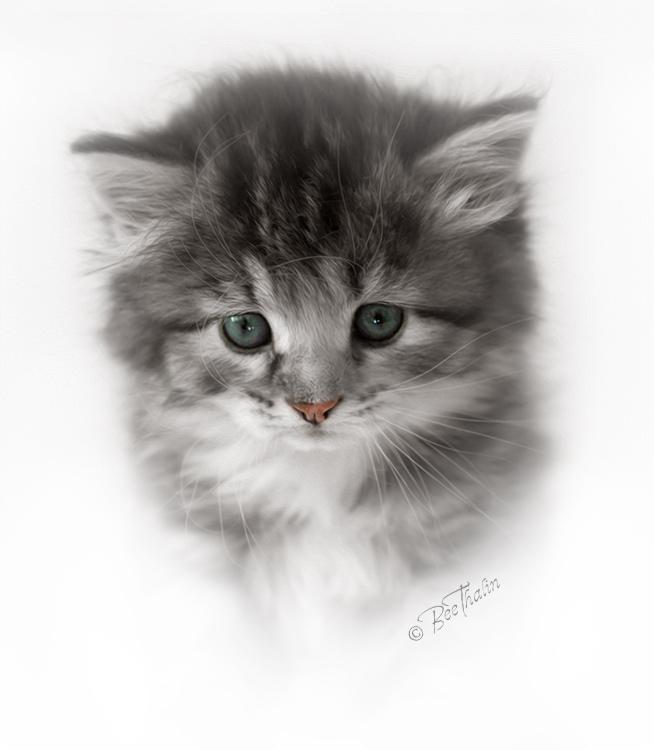 Kort - Ebba, Sibirisk kattunge