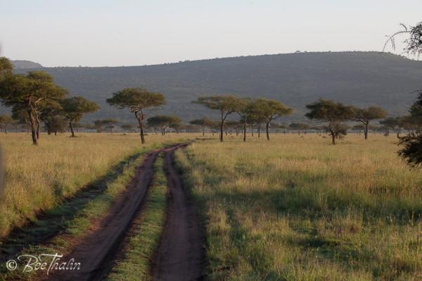 Morgonstund i Serengeti Tanzania