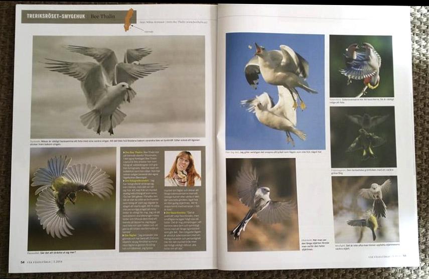 Tidningen Vår Fågelvärld