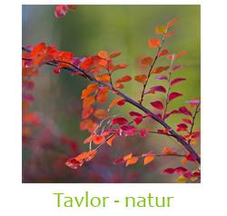 Tavlor - natur
