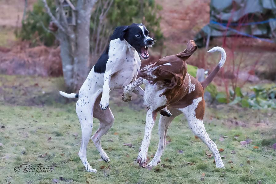Toka och Poppie leker