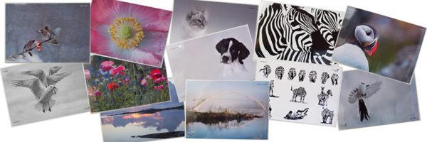 Bordstabletter djur och natur